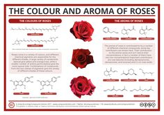 Roses are red, And they have a nice smell, Thanks to rose oxide, And rose ketones as well. Learn more about the chemistry of roses with this graphic! http://wp.me/s4aPLT-roses