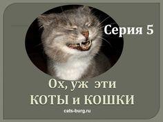 ПРИКОЛЫ - СМЕШНЫЕ КОТЫ И КОШКИ.ПОДБОРКА #5/Funny Cats Complation