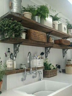 Rustic wood shelves with metal brackets above sink and work space, with cute ferns and plants