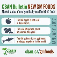 GE Crops and Foods (Not on the Market) / Topics / Resources / Take Action - Canadian Biotechnology Action Network Foods To Avoid, Biotechnology, Salmon, Marketing, World, Atlantic Salmon, Trout