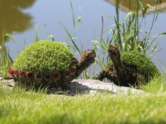 I love those chia pets. ..... love these turtles, they look realistic by this pond..