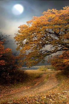 Autumn - via: wistfullycountry - Imgend
