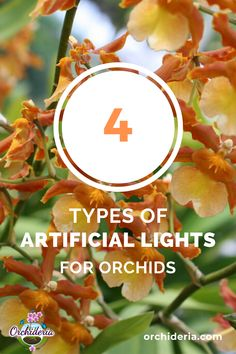 Orchid Light Requirements: 4 Solutions for Artificial Light — Orchideria Container Gardening Vegetables, Succulents In Containers, Container Flowers, Container Plants, Vegetable Gardening, Indoor Orchid Care, Indoor Orchids, Indoor Plants, Indoor Gardening