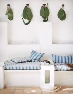cacti hanging above
