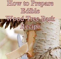 How to Prepare Edible Wood Tree Bark Recipe Homesteading - The Homestead Survival .Com