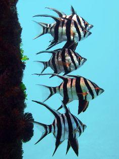 most beautiful fish 13