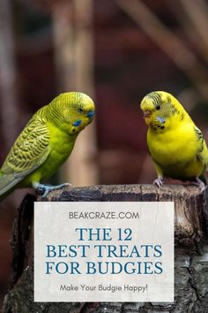 Here are the 12 best treats for budgies! eagle owls of paradise birds Budgie Food, Parakeet Food, Parakeet Care, Budgie Parakeet, Budgies Care, Breeding Budgies, Cockatiel Care, Baby Parakeets, Pets