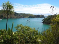 Must-Do's in New Zealand The Beautiful Country, Beautiful Places, Waiheke Island, British Isles, Auckland, What Is Like, Homeland, Nice View, Road Trips