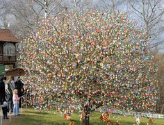 Meant to be the first dab of spring color, Easter eggs are often hung from...