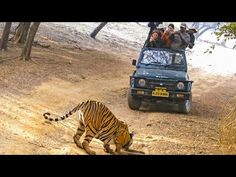 Video: Magisches Indien entdecken und erleben | traveLink.
