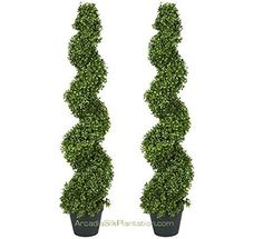 Amazon.com - TWO Pre-potted 4' Spiral Boxwood Artificial Topiary Trees. In Plastic Pot - Artificial Trees For Outdoors