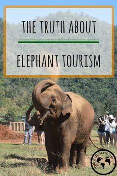 If you've ever considered visiting Thailand, you've probably thought about spending some time with their gorgeous elephants. Don't make the mistake of picturing yourself riding one though! The animals are hugely mistreated.