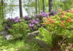 Metsäisellä tontilla viihtyvät luonnonkasvit. Istuta niiden joukkoon koriste- ja hyötykasveja. Lue Meidän talon vinkit metsäpihan suunnitteluun!