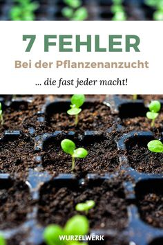 Die 7 häufigsten Fehler beim Gemüse-Anziehen The 7 Most Common Mistakes When Dressing Vegetables - And How To Avoid Them! Many gardeners like to prefer tomatoes and other young plants by the window, b Bog Garden, Backyard Vegetable Gardens, Water Garden, Shade Garden, Outdoor Gardens, Commercial Landscaping, Home Landscaping, Growing Plants, Growing Vegetables