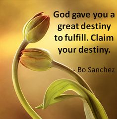 Quote for the Day: Claim your destiny | Destination FEED