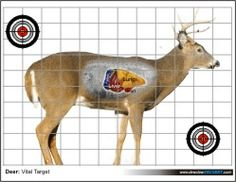 Eloquent image with regard to deer vitals target printable