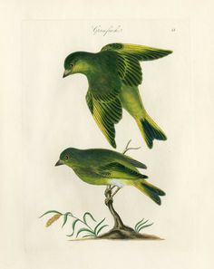 Bolton Bird Prints Nest & Egg Prints 1845