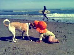 SONIA'S FAVE PAWESOME POSTS OF 2012