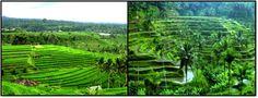 Hayati Blogs: General Information Of Bali Part II