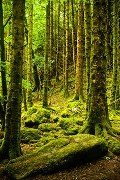 Forest of moss, Killarney National Park, Ireland