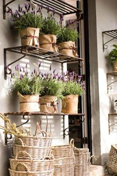 Cheap Home Decor Planting lavender in pots - Little Piece Of Me.Cheap Home Decor Planting lavender in pots - Little Piece Of Me