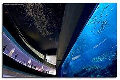 In the Dubai Mall, I must visit Ashlee here and see this mall!