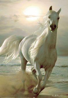 White horse gallops on beach
