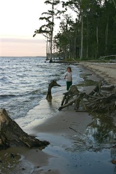 Cyprus creature in the Neuse River Inlet, New Bern, NC. Image by Brenda Gartin. BrendaGartin.com