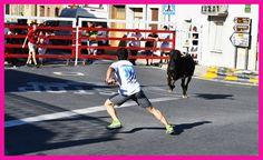 Santacara: Vacas de Santos Zapatería - Santacara Año 2019 Saints, January 20, Cows