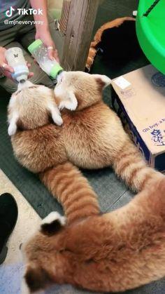 Cute Wild Animals, Baby Animals Pictures, Super Cute Animals, Cute Little Animals, Cute Animal Pictures, Cute Funny Animals, Animals Beautiful, Cute Cats, Funny Animal Jokes