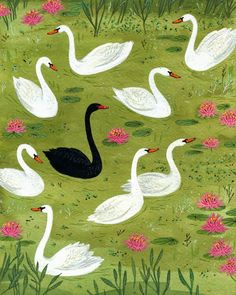 the black swan. Art Et Illustration, Pattern Illustration, Swans, Black Swan, Pink Black, Of Wallpaper, Bird Art, Becca, Illustrations Posters