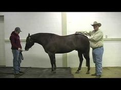 What to look for in a reining horse prospect
