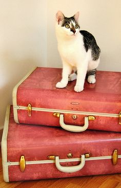 I love this colour of vintage Samsonite luggage.  This kitty is adorable too!