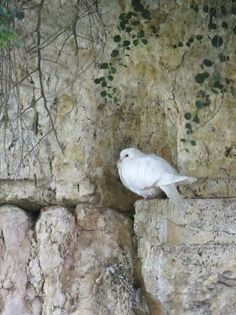 The Dove of Peace - Israel. Photo by Sarah Lavi