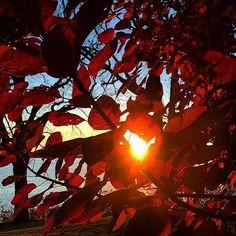 Lake Minnetonka foliage sunset. #lakeminnetonka #minnesota #mn #exploremn #fall #autumn #sunset #tonka #lake #minnetonka #foliage