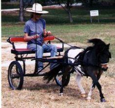 Dent Family Miniature Horse Ranch - miniature horses for sale Miniature Horses For Sale, Miniature Ponies, Mini Horse Cart, Horse Wagon, Tiny Horses, Horse And Buggy, Horse Ranch, Pony Drawing, Draft Horses