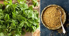 A flavorful herb you may never have thought of growing, fenugreek is rich in nutrition, and is easy to use and cultivate. https://articles.mercola.com/sites/articles/archive/2018/03/30/growing-fenugreek.aspx?utm_source=dnl&utm_medium=email&utm_content=art2&utm_campaign=20180330Z1_UCM&et_cid=DM195660&et_rid=260284421