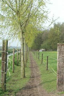 Willow along the track, created by willow brances stuck in the ground. Horse Paddock, Horse Stables, Horse Barns, Horses, Horse Shed, Permaculture, Farm Layout, Dream Stables, Future Farms