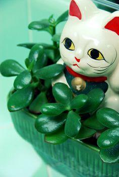 jade plant lucky cat california pixie cute vintage blog