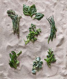 EDIBLE COASTAL GREENS / Clockwise from top left: seablite, warrigal greens, marsh samphire, karkalla, saltbush, barilla, sea parsley.