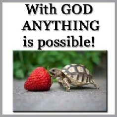 Love this...the beautiful strawberry; the valor of the small turtle and the truth of the words. Small Turtles, Free Desktop Wallpaper, Turtle Love, Spiritual Messages, Memory Verse, Anything Is Possible, Cute Little Baby, The Kingdom Of God, Christian Inspiration