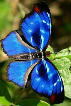 Different Types of Butterflies Types Of Butterflies, Flying Flowers, Butterflies Flying, Most Beautiful Butterfly, Beautiful Bugs, Amazing Nature, Butterfly Effect, Butterfly Kisses, Blue Butterfly