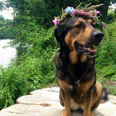 Hippiedog :)