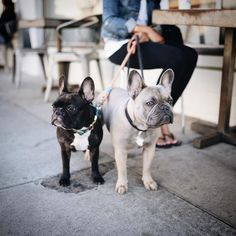 People are walking by thinking I'm the older one. by greysonthedapperfrenchie
