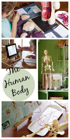 Exploring the Human Body: A child-led approach to learning from An Everyday Story