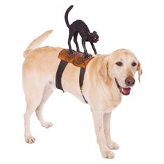 Black Cat Rider Pet Costume  - One-Size