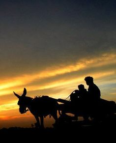 OFF INTO THE SUNSET:  A Pakistani man rides his donkey cart as the sun sets in Lahore. (Arif Ali, AFP) Sun Sets, The Donkey, Donkeys, Shaggy, Aliens, Farms, Pakistani, South Africa, Outdoors