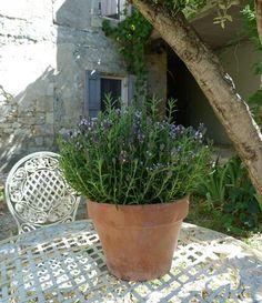 Deborah Lawrenson: Quintessential Provence