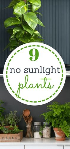 9 Plants That Need (Almost!) No Sunlight Gardening, Indoor Gardening, Indoor Gardening for Beginners