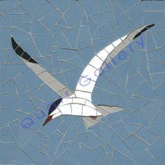 Tern (Common)                                                                                                                                                                                 More